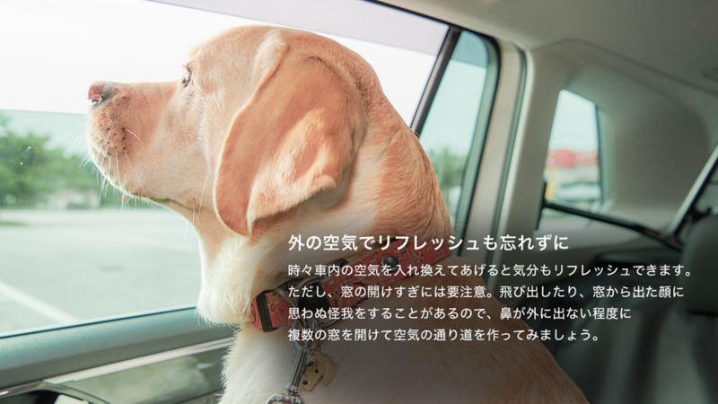 ペットと出かけよう。|車の中でのポイント|外の空気でリフレッシュも忘れずに