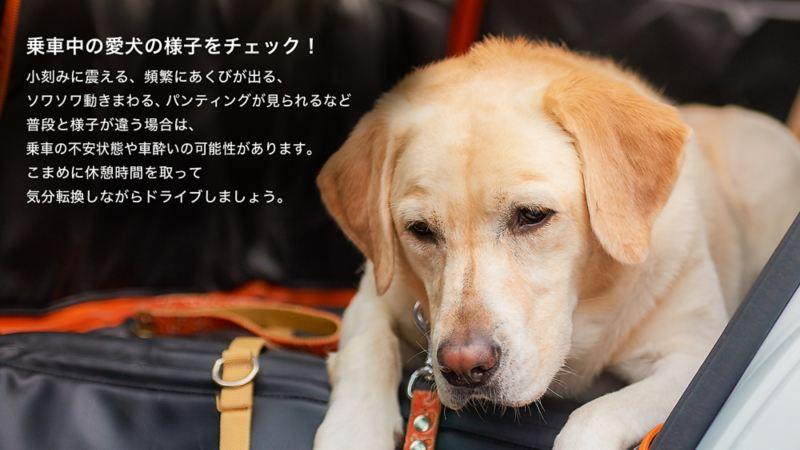 ペットと出かけよう。|車の中でのポイント|乗車中の愛犬の様子をチェック!
