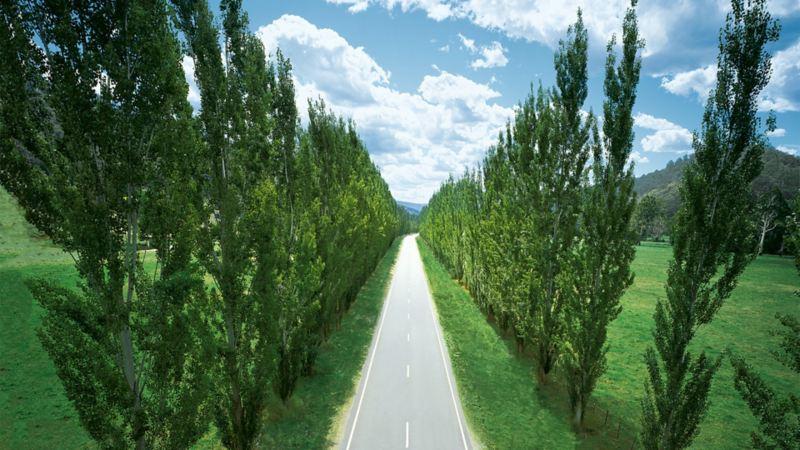Prosta droga z drzewami na poboczu