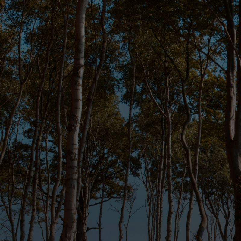 La photo d'une clairière