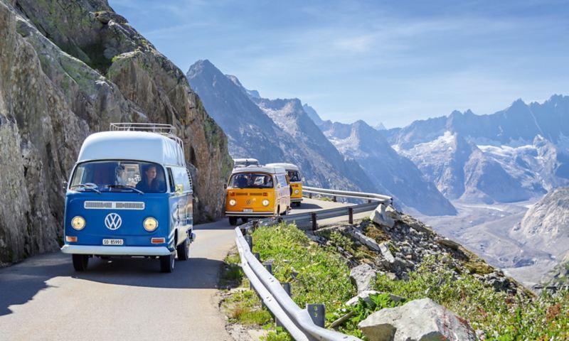 Trois bullis roulant en ligne sur une route de montagne