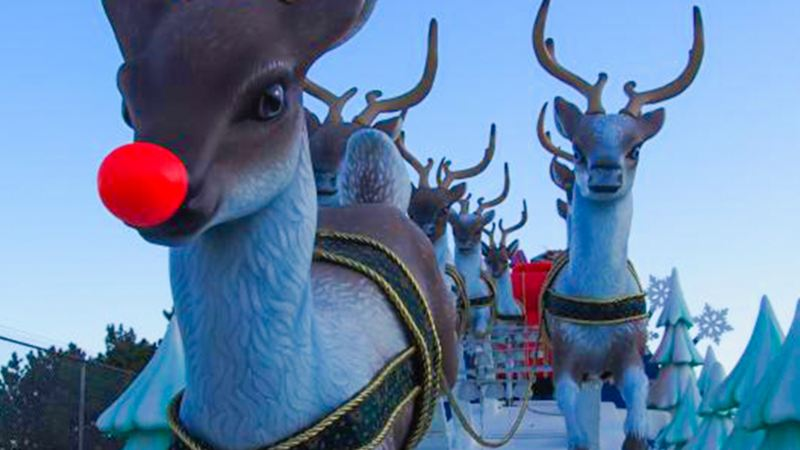 Reindeer with red nose