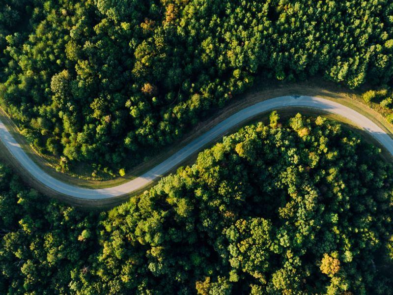 Une route changeante mène à travers une forêt.