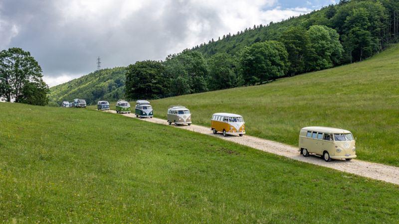Eine VW Bulli Kolonne auf einem Feldweg.