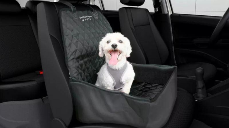 Perro mediano en asiento trasero de automóvil Volkswagen, el carro apto para viajar con tus mascotas