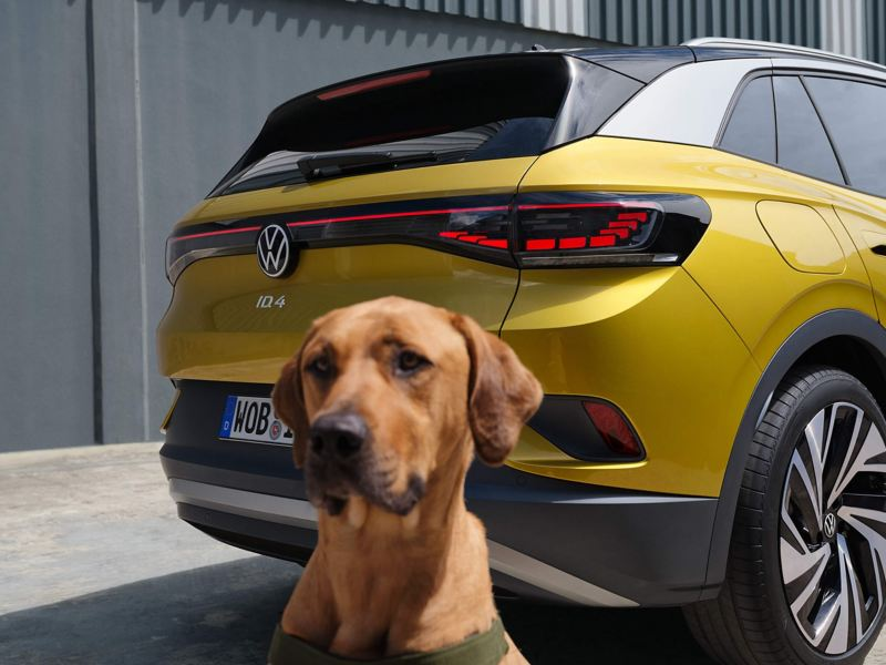A dog sat infront of the tail lights of a yellow ID.4