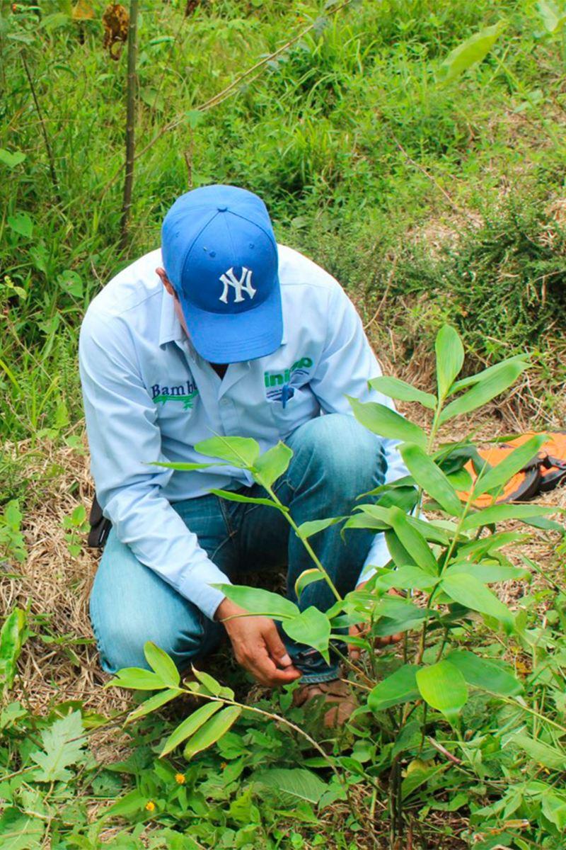 Plantación de Bambú Nativo en Hueytamalco - Proyecto de Por Amor a México de VW MX