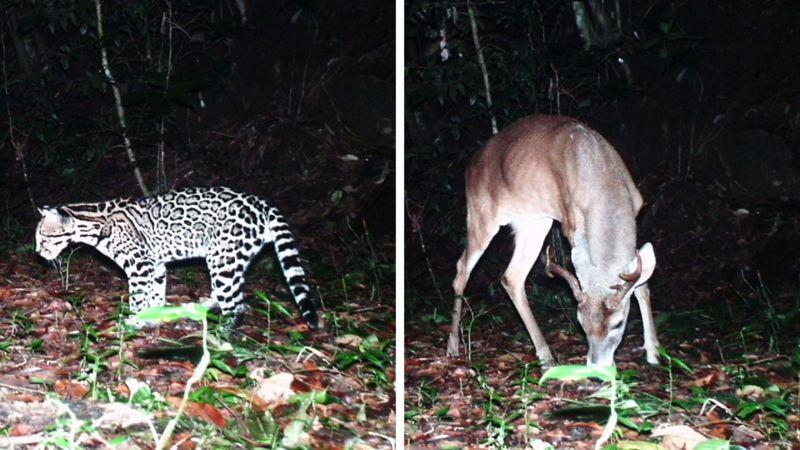 Fauna preservada con proyecto Bambú de Volkswagen - Por Amor a México